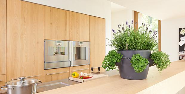 mini kr uterg rten f r fensterbank und k che tipps vom einrichter. Black Bedroom Furniture Sets. Home Design Ideas